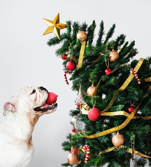Dog next to a Christmas tree
