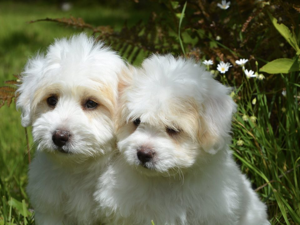 dog grooming bergen county