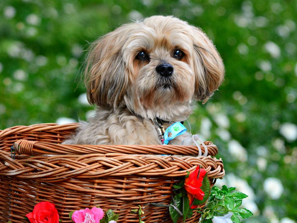 cute dog in basket