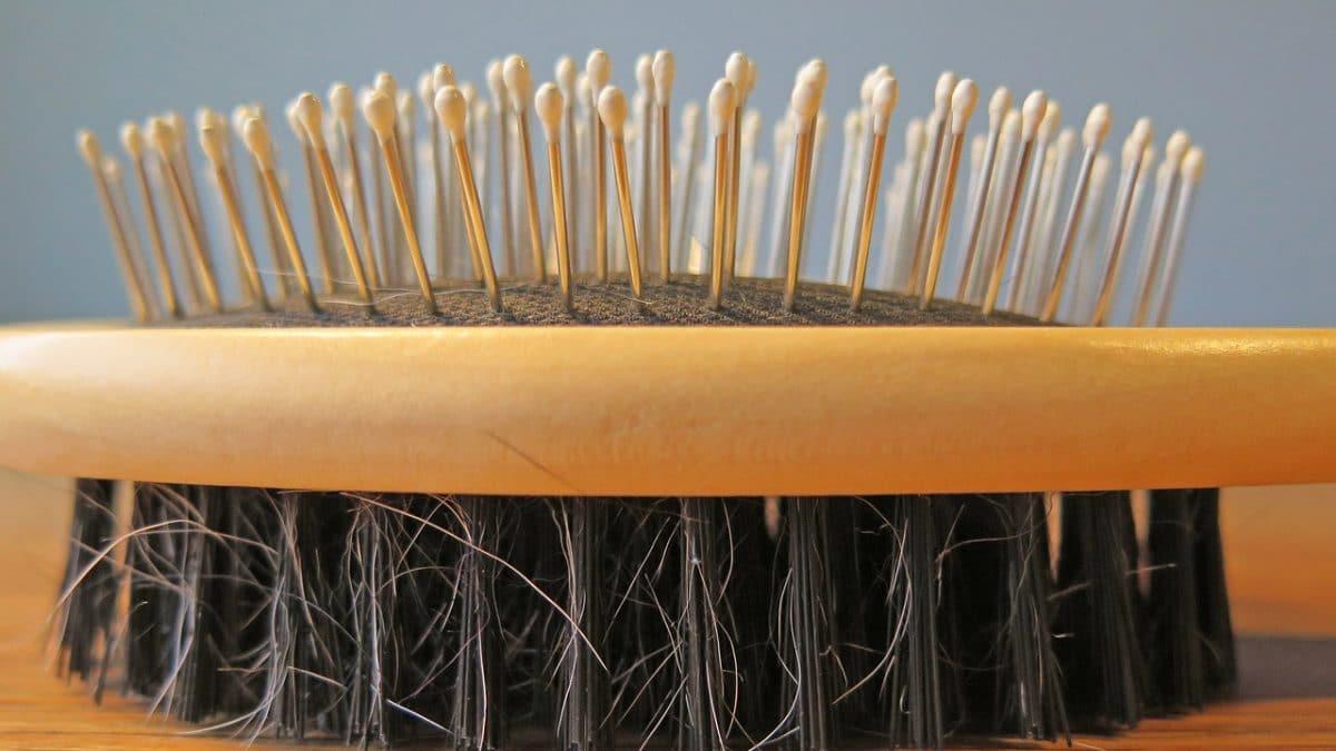 dog hair brush